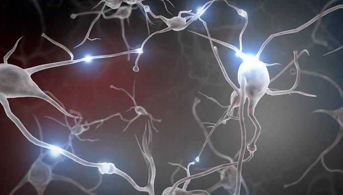 Cấu trúc não được hình thần dần dần, từ dưới lên.