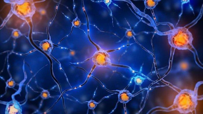 Cấu trúc não được cấu thành từ hàng tỉ nơ-ron thần kinh.