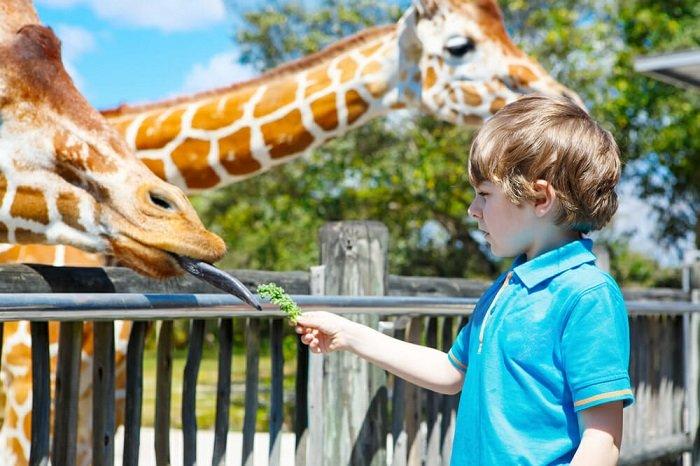 bé chươi cùng hươu cao cổ ở sở thú