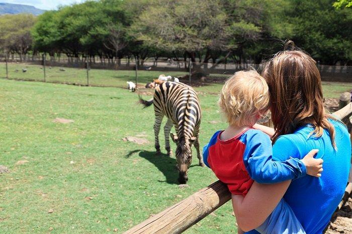bé đi sở thú