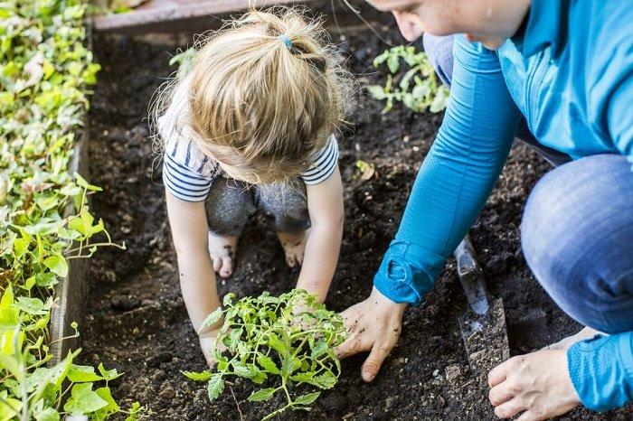 Dạy con tự lập bằng cách cùng con trồng cây.