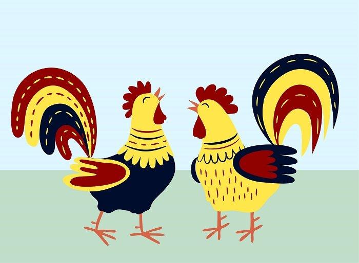 câu chuyện hai con gà trống