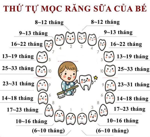 bảng thứ tự mọc răng giải đáp câu hỏi trẻ mấy tháng mọc răng