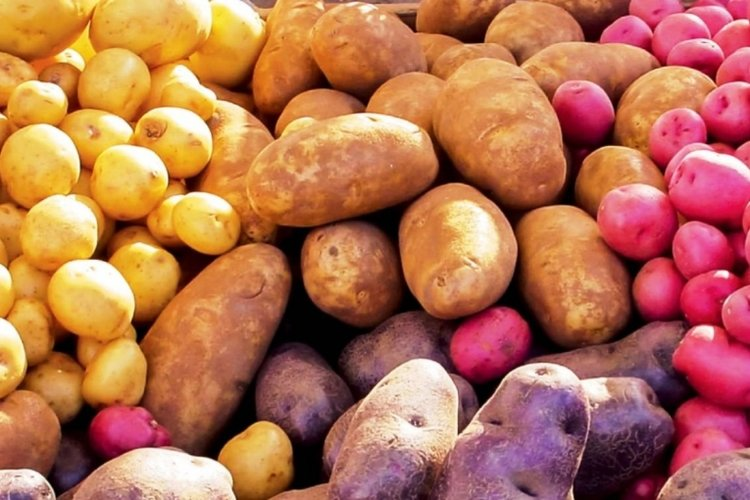 trẻ 6 tháng tuổi ăn được những gì, bé ăn được khoai tây