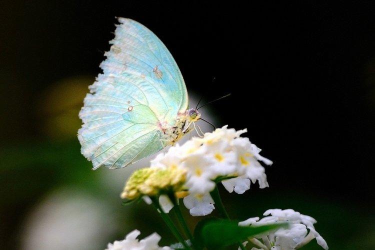 thơ cho bé 5 tuổi về con bướm trắng đậu trên bông hoa