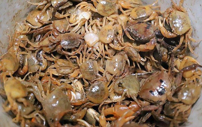 trẻ mấy tháng thì ăn được cua biển
