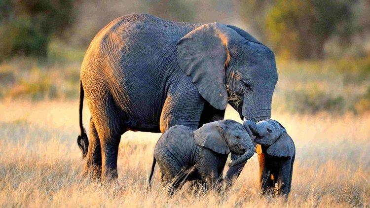Con voi mẹ và voi con