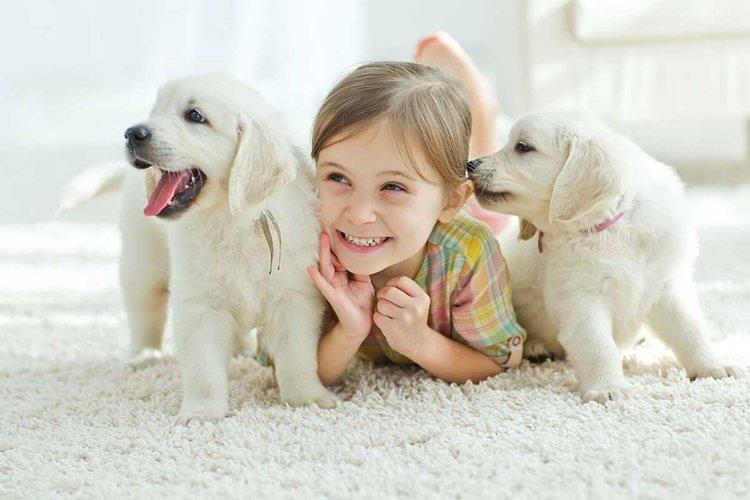 bé gái chơi cùng hai chú chó trắng