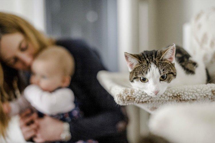 nuôi mèo khi nhà có trẻ sơ sinh