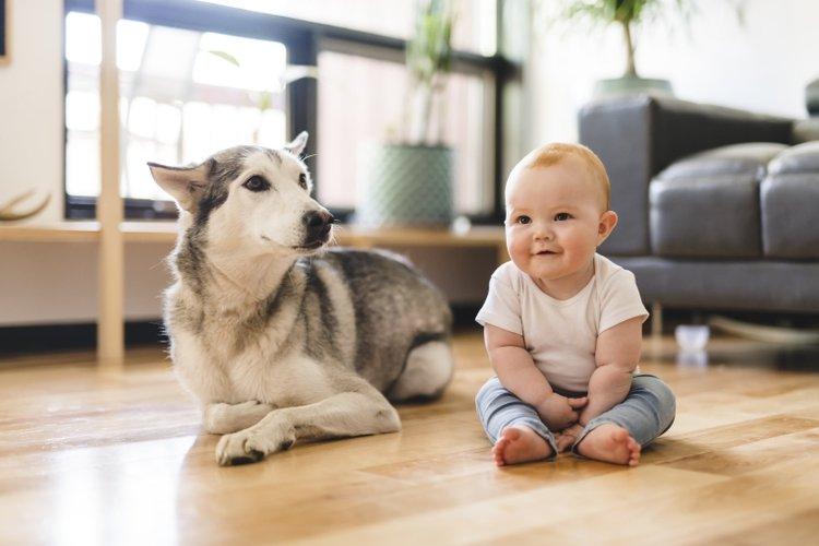 Nuôi thú cưng thế nào khi nhà có trẻ nhỏ